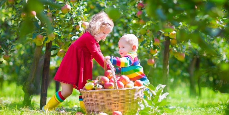 Bonheuriser la pomme